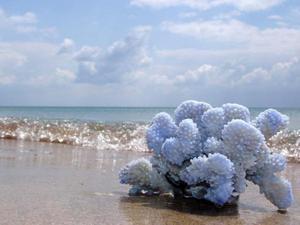 Черный коралл украшения